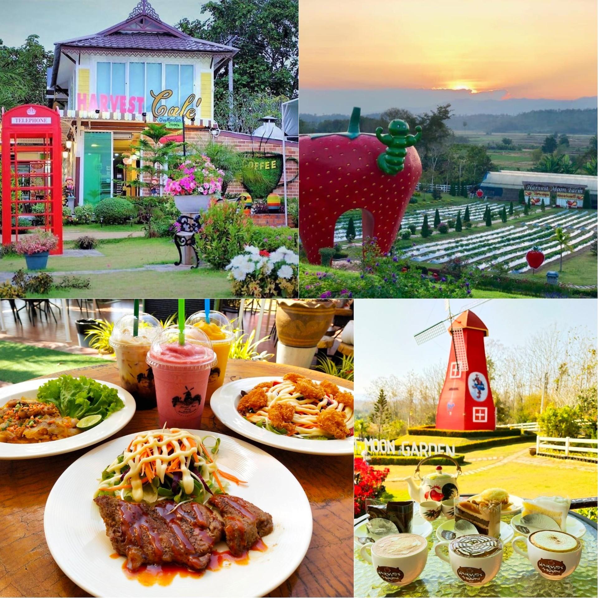 Harvest Moon Farm & Cafe