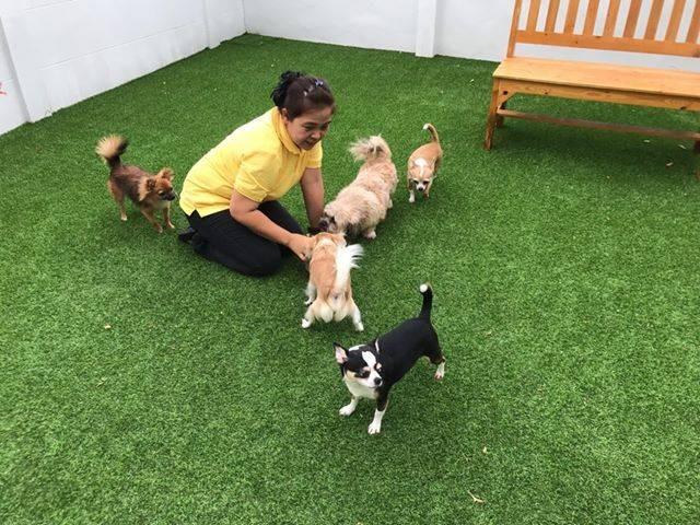 โรงพยาบาลสัตว์และโรงแรมสัตว์เลี้ยง สุวรรณภูมิแอร์พอร์ต (SA Pet Hospital & Hotel)