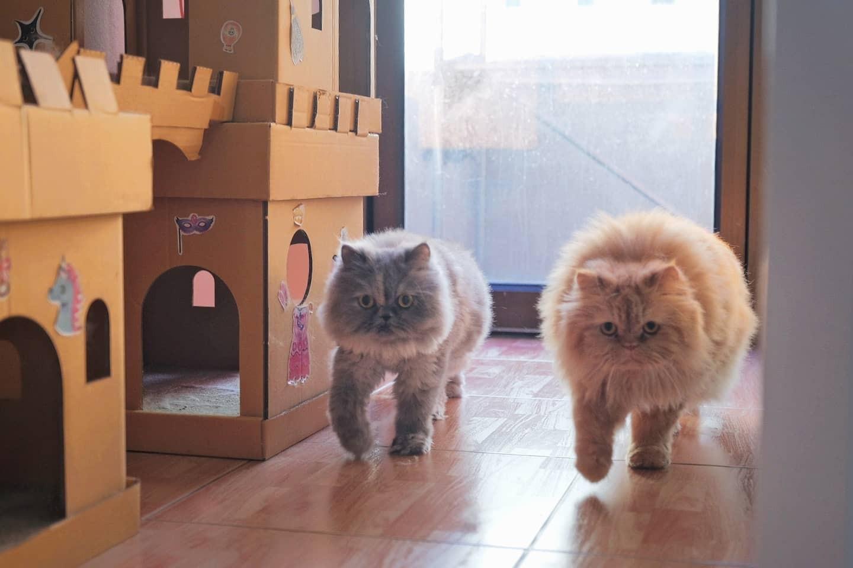 แมวสบาย Cat House โรงแรมแมว