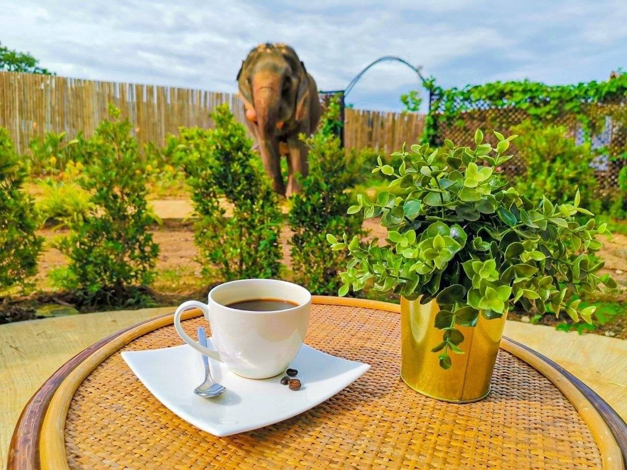 Elephant Jungle Cafe