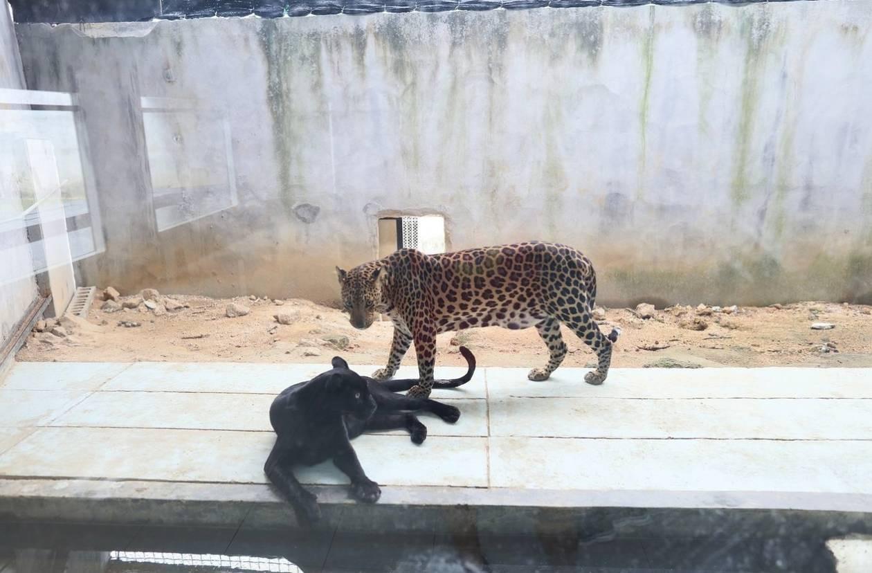 สวนเสือและสัตว์น้ำสมุย