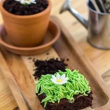 Daisy Pot Cake