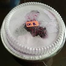 Blue berry ice cream ( 50 บาท)
