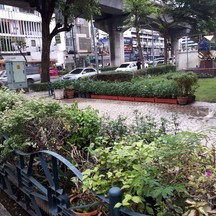 ปากซอยพหลโยธิน4 บริเวณที่มีต้นไม้จนท.บอกว่าจะย้ายร้านในซอยมาริมถนน