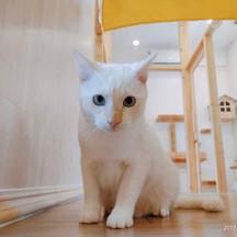 ขอขอบคุณรูปภาพจาก FB Kofuku Cat Hotel โรงแรมแมว โคฟูกุ รับฝากแมว