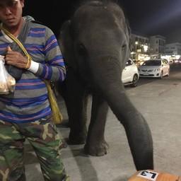 ช้างก็มา