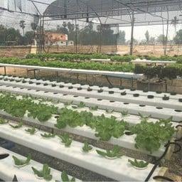 ชม-ลม Coffee And Farm