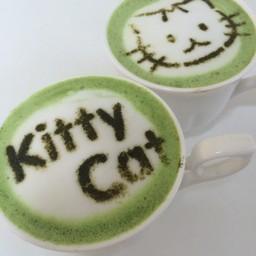 Kitty Cat Cafe พระนคร