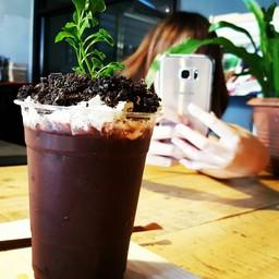 Cocoa Bonsai