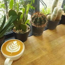 กาแฟโอชา สาขาถนนสุเรนทร์ ลำปาง