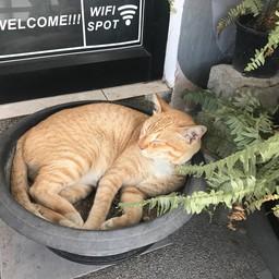 แมวหน้าร้านน่ารัก5555