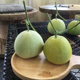 A Melon Factory