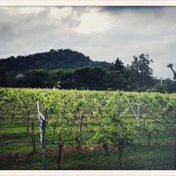 GranMonte Vineyard and Winery เขาใหญ่