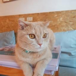 บรรยากาศ Catmosphere Cat Café  เชียงใหม่