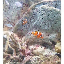 สถานแสดงพันธุ์สัตว์น้ำ จันทบุรี