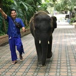 ลานแสดงช้างและฟาร์มจระเข้สามพราน