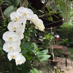 บรรยากาศ Mai Bakery in garden ช้างเผือก