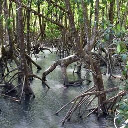 เส้นทางศึกษาธรรมชาติป่าชายเลนบ้านสลักคอก