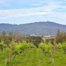 บรรยากาศ Village Farm & Winery