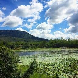 ศูนย์ท่องเที่ยวเชิงอนุรักษ์ป่าเขาภูหลวง (วังน้ำเขียว)