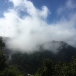 ทิวทัศน์ป่าสะเมิง