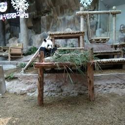 บรรยากาศ สวนสัตว์เชียงใหม่