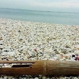 หาดกัปตันยุทธ