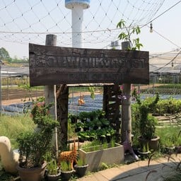 บรรยากาศ สวนผัก โอ้กะจู๋ ออร์แกนิค หนองจ๊อม