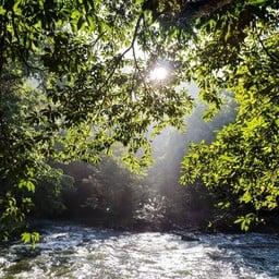 ภูต้นน้ำ รีสอร์ท