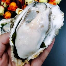 A25 หอยนางรม (ร้าน - AHHOI)
