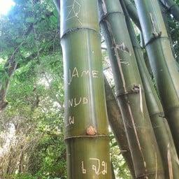 วัดป่าธรรมอุทยาน