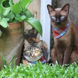 Cat Dominium Garden Hotel
