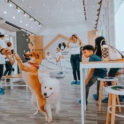 BLABLAB๋OO Premium Dog Cafe @Ayutthaya คาเฟ่หมาที่ใหญ่ที่สุดในจังหวัดอยุธยา
