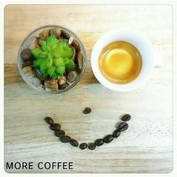 MORE COFFEE (มอร์ คอฟฟี่) วังหลัง