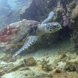 DJL Diving Koh Lipe