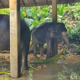 ปางช้าง เอเชีย ซาฟารี เขาหลัก