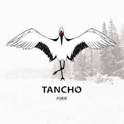 Tancho Cha ตันโจ ฉะ หลังมช.