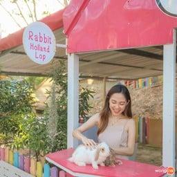 """Rabbit Holland Lop"" บ้านกระต่ายที่มีน้องๆ คอยมอบความน่ารักให้ไม่อั้น"