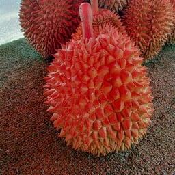 Durian ทุเรียนซิ่ง