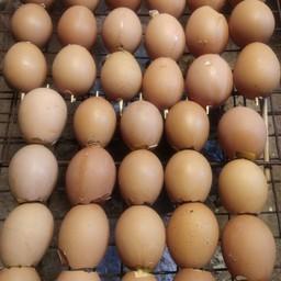 ไข่ปิ้ง น้องเฌอเบลล์ ตลาดเปิดท้าย มข.