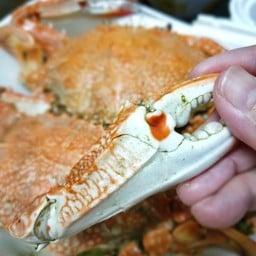 ตอง King Sea Food