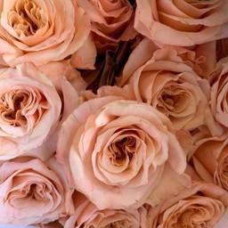 Rose Syrup (Stevia) 10ml