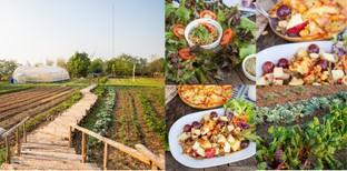 [รีวิว] ไร่ภูแสงทอง ร้านอาหารชัยภูมิ อบอุ่นด้วยไร่ผัก แด่คนรักสุขภาพ