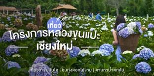 เที่ยวเชียงใหม่ที่โครงการหลวงขุนแปะ ม่วนงันลมหนาว ก๋างโต้งดอกไม้งาม