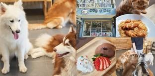 """[รีวิว] """"7 Day Dog Cat Cafe"""" คาเฟ่หมาพัทยา สวรรค์ของทาสหมาทาสแมว"""