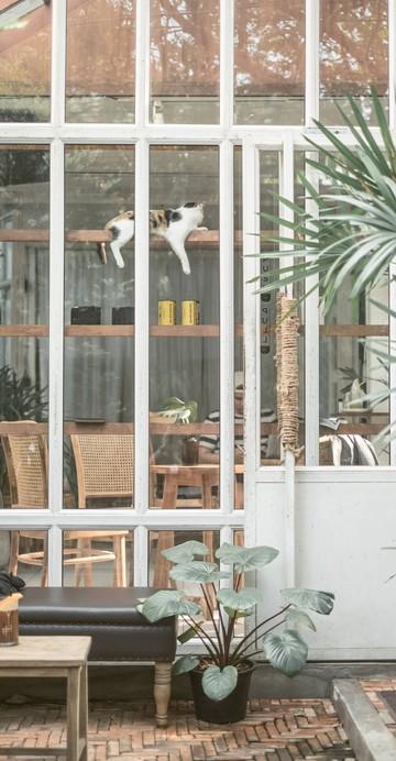 คาเฟ่ลับ ๆ ในคูเมืองที่จะชวนมานั่งรับอากาศโล่ง ๆ ด้วยการตกแต่งแบบกระจกโปร่งใสท่ามกลางต้นไม้เขียวขจี