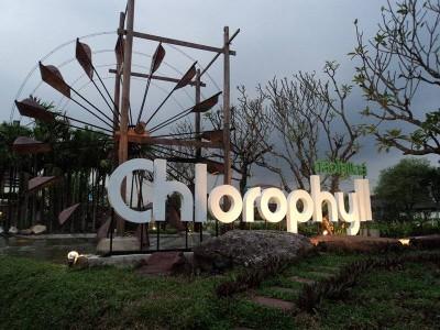 Chlorophyll (คลอโรฟิลล์)