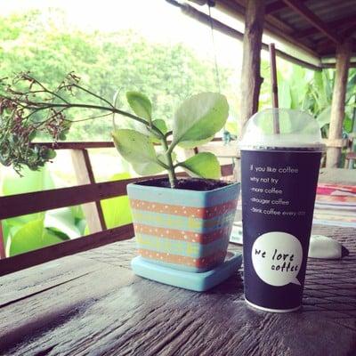 ปีกไม้กาแฟสด (Coffee teak)
