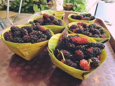 Siam Thai Fruit Icecream ตลาดเกษตร มอ.