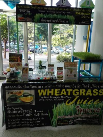 Wheat Grass Juice (ต้นอ่อนข้าวสาลี-วีสกราส) การเคหะแห่งชาติ